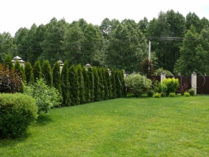 ландшафтный дизайн газон