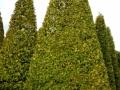 Растения из Германии