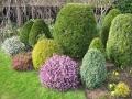 Хвойные в саду дизайн